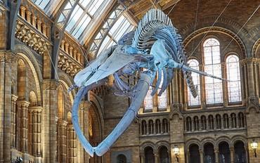 Year 8 Natural History Museum Visit